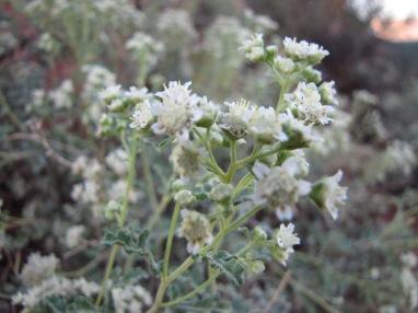 Sedona Blooms