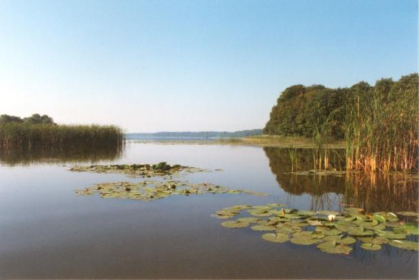See im Müritz-Nationalpark mit Seerosen