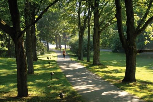 Omega-trees-path-copy-500x334